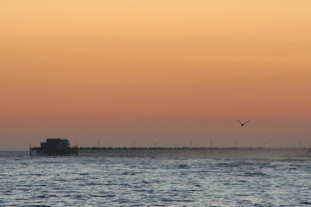 Pier and Seagull