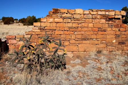 Stone Wall and Cactus