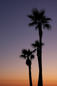 Palm Trees and Star