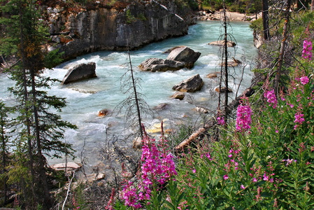 Marble Canyon & Fireweed
