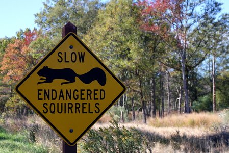 Endangered Squirrels