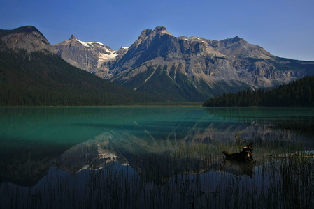 Emerald Lake Reflection #3