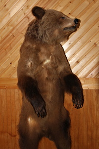 Stuffed Grizzly
