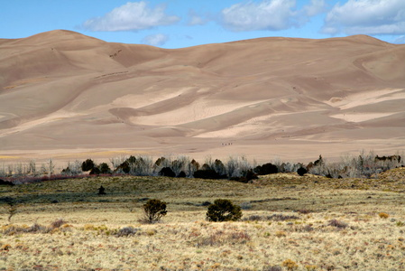 Dunes and Dry Grass