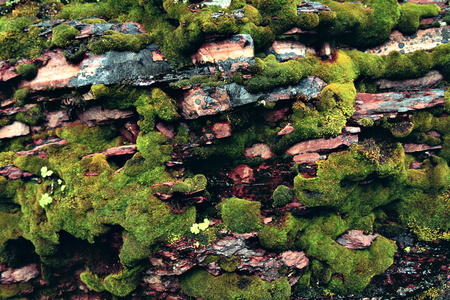 Moss-covered Rock