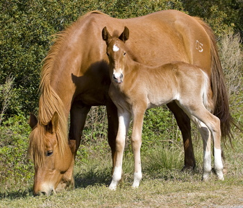 Horse and Foal #2