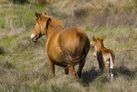 Horse and Foal #3