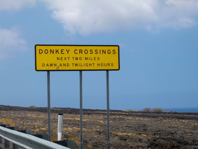 Donkey Crossing