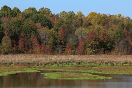 Fall at Huntley Meadows #2