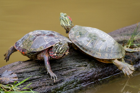 Turtles Stretching