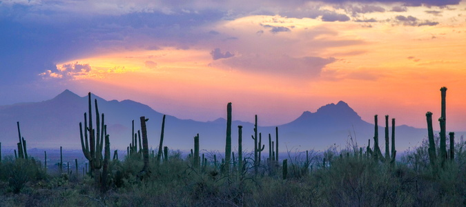 Saguaro Sunset #2