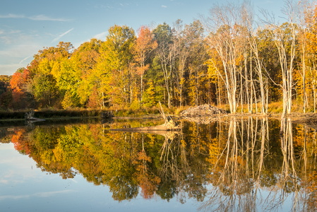 Huntley Meadows in Fall #9