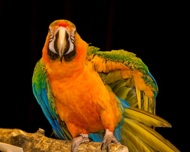 Catalina Macaw Welcome