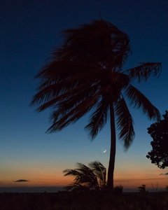Sunset Palm and Crescent Moon
