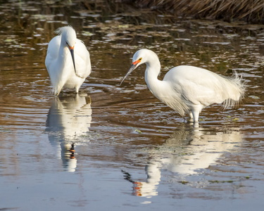Egret and Reflection #8