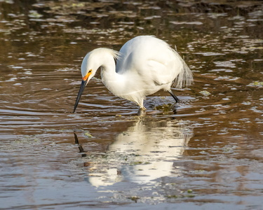 Egret and Reflection #9