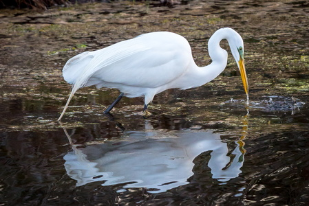 Egret and Reflection #1