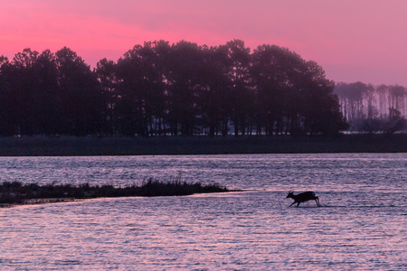 Chincoteague Sunrise #3