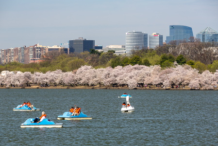 Paddle Boats and Cherry Trees