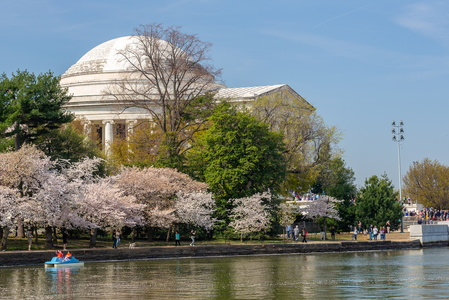 Jefferson with the Cherry Blossoms #2