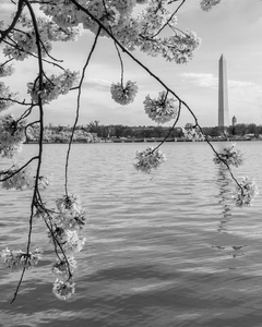 Tidal Basin In Black and White