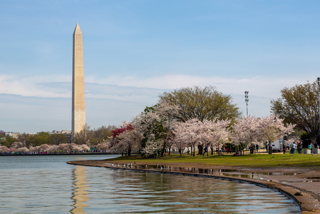 Washington and the Cherry Blossoms