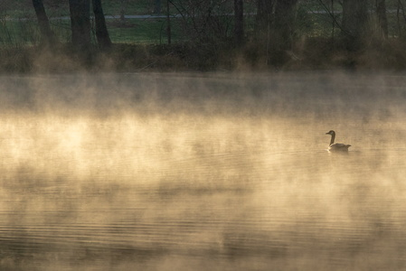 Goose in the Mist