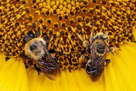 Resting Bees