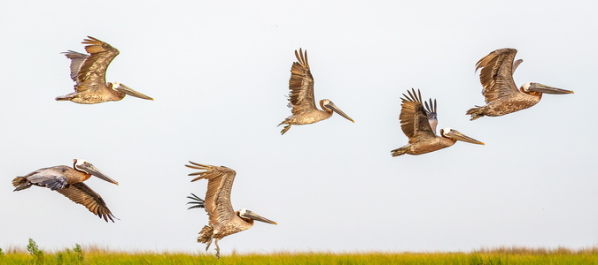Stages of Flight