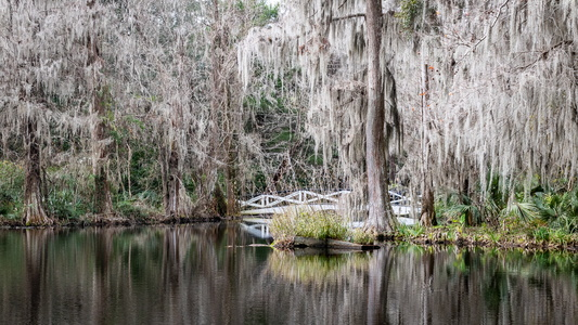 Spanish Moss Reflection #3