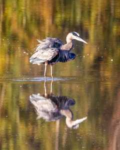 Huntley Heron