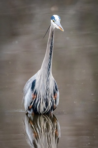 Huntley Heron #3