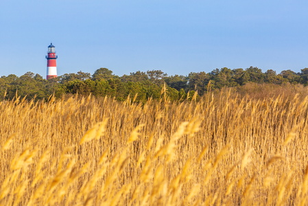 Lighthouse Above Golden Grass
