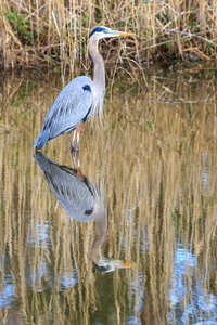 GBH Reflection