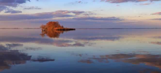 Lake Mattamuskeet Reflection #2