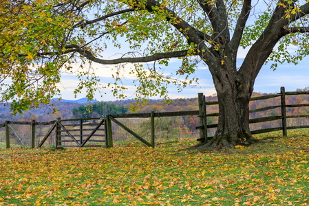 Fall Color & Fence