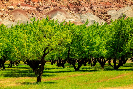 Orchards #2